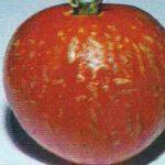 Оспа на плодах томата фото