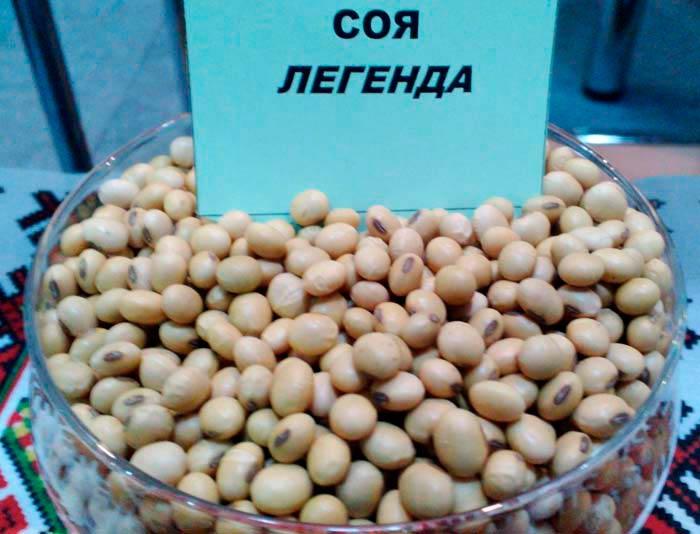 Семена сои Легенда - фото