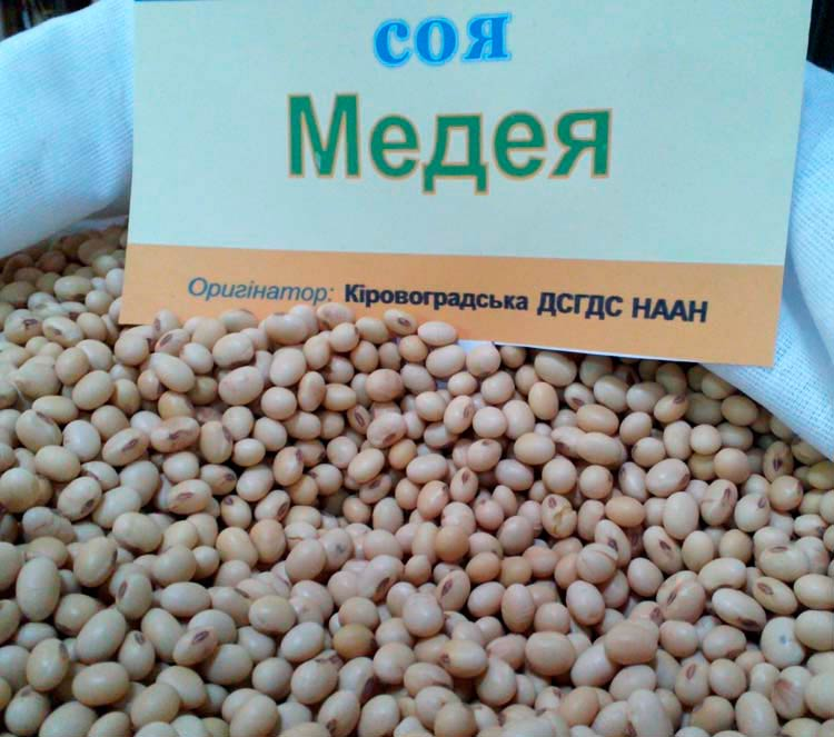 Семена сои Медея - фото