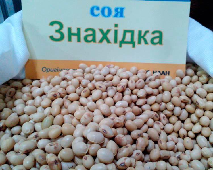Семена сои Знахидка - фото