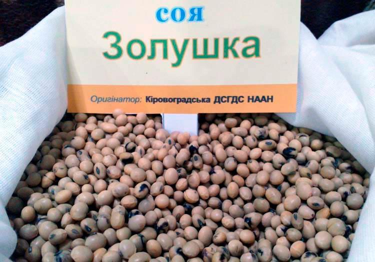 Семена сои Золушка - фото