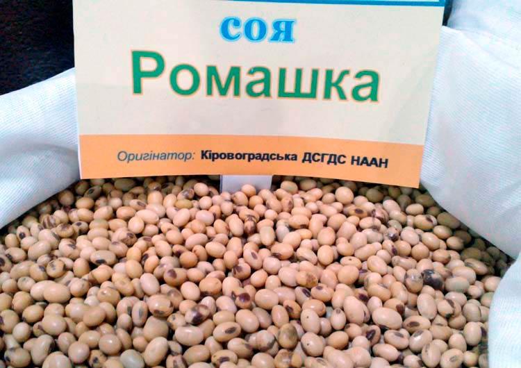 Семена сои Ромашка - фото
