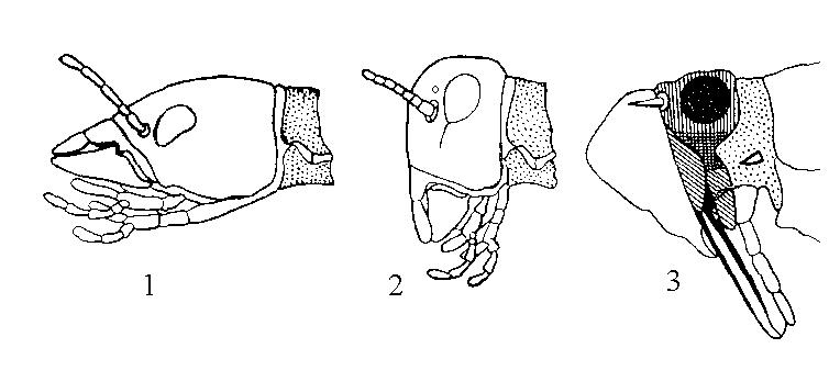 Типы постановки головы насекомых