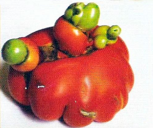 Гипертрофия плодов фото