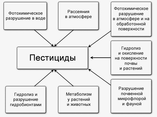 Схема разложения пестицидов в почве