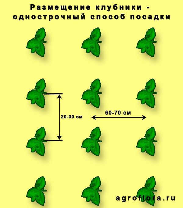 Однострочный способ посадки клубники