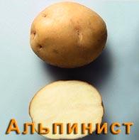 Картофель Альпинист