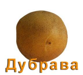 Картофель Дубрава