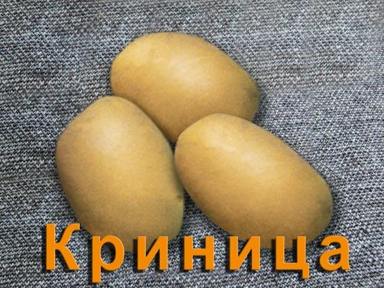 Картофель Криница