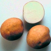 Картофель Лазурит