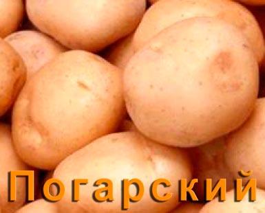 Картофель Погарский