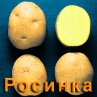 Картофель Росинка