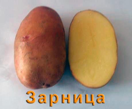 Картофель Зарница