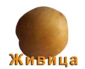 Картофель Живица