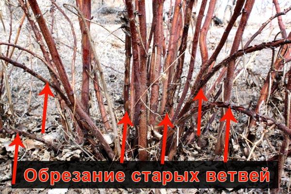 Обрезка старых ветвей малины